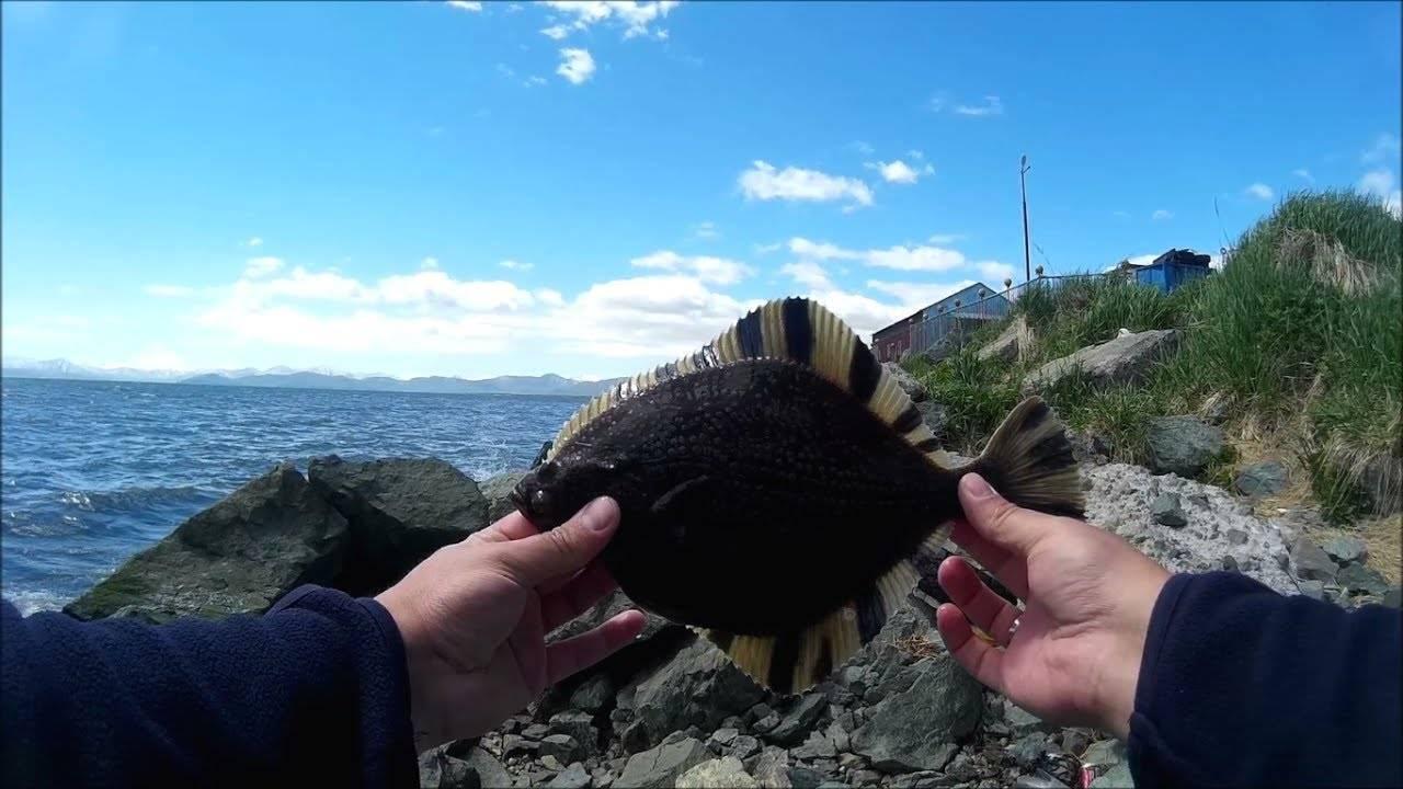 Камбала рыба. образ жизни и среда обитания рыбы камбалы | животный мир