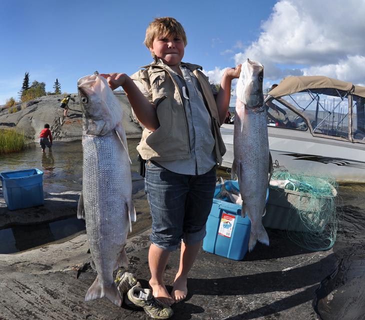Нельма: описание рыбы, распространение, питание, нерест и выращивание
