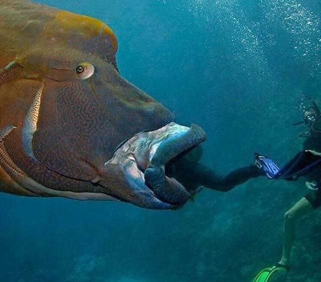 Самая большая рыба в мире: топ-10 огромных обитателей морей и океанов на свете, как выглядят и чем питаются