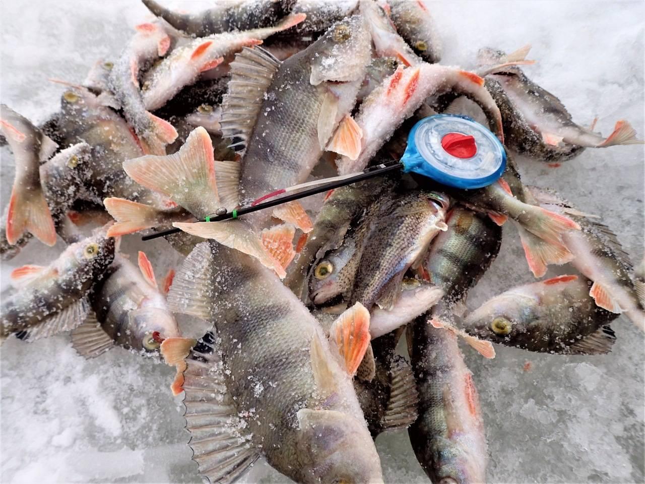 Ловля ерша зимой на мормышку - выбор приманки, техника игры