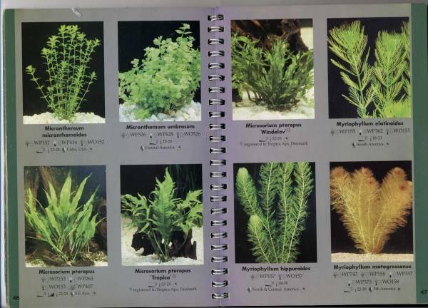 Самые неприхотливые растения для аквариума