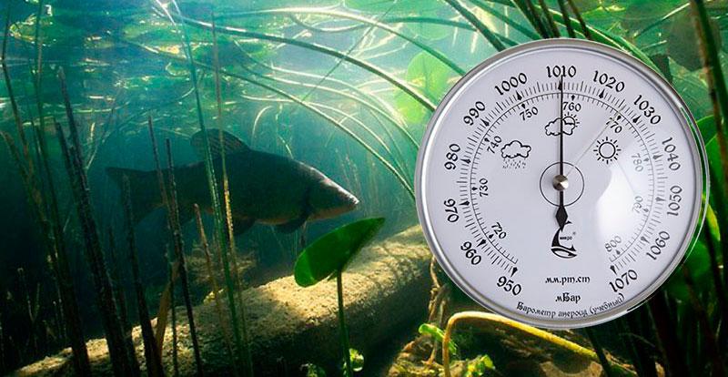 Подводная охота на щуку — особенности, правила и отзывы