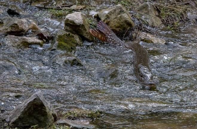 Осенняя щука. о том как ловить зубастую хищницу