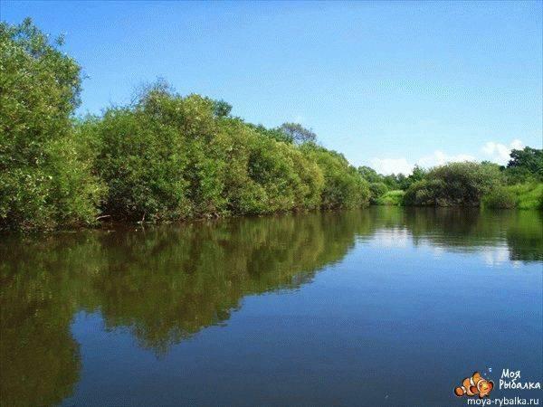 Лучшие места для рыбалки в брянской области