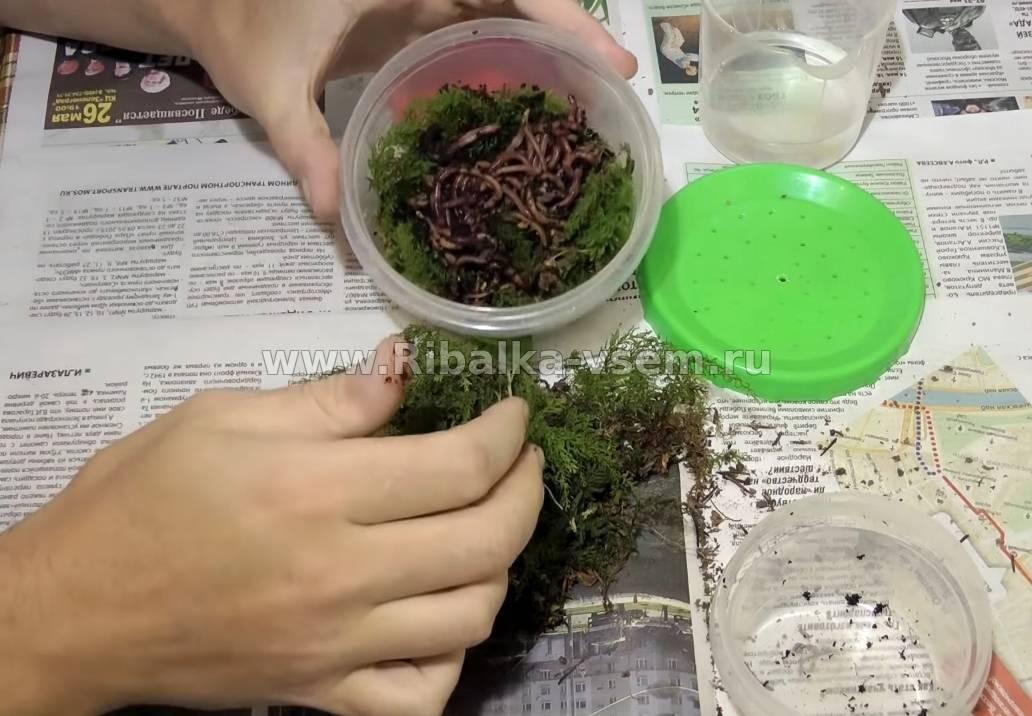 Как сохранить червей для рыбалки в домашних условия и чем кормить