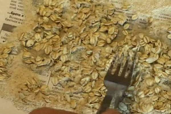 Рабочие рецепты приготовления насадки на основе геркулеса для рыбалки