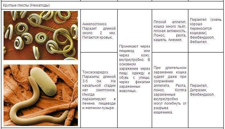Красные черви в рыбе: фото, что это и опасны ли для человека