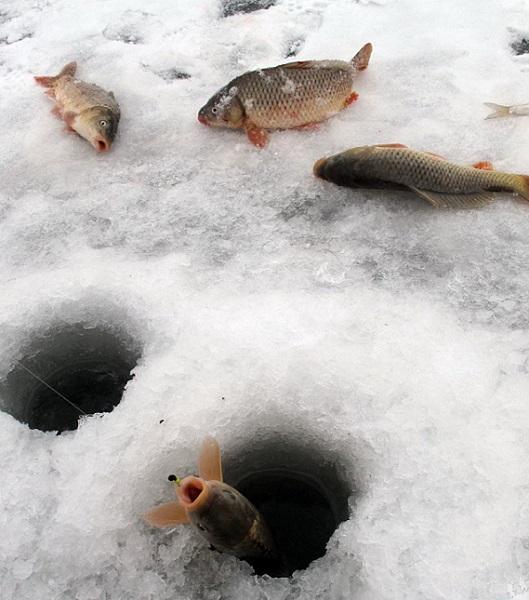 Карп зимой на мормышку - особенности ловли, выбор снасти, места ловли