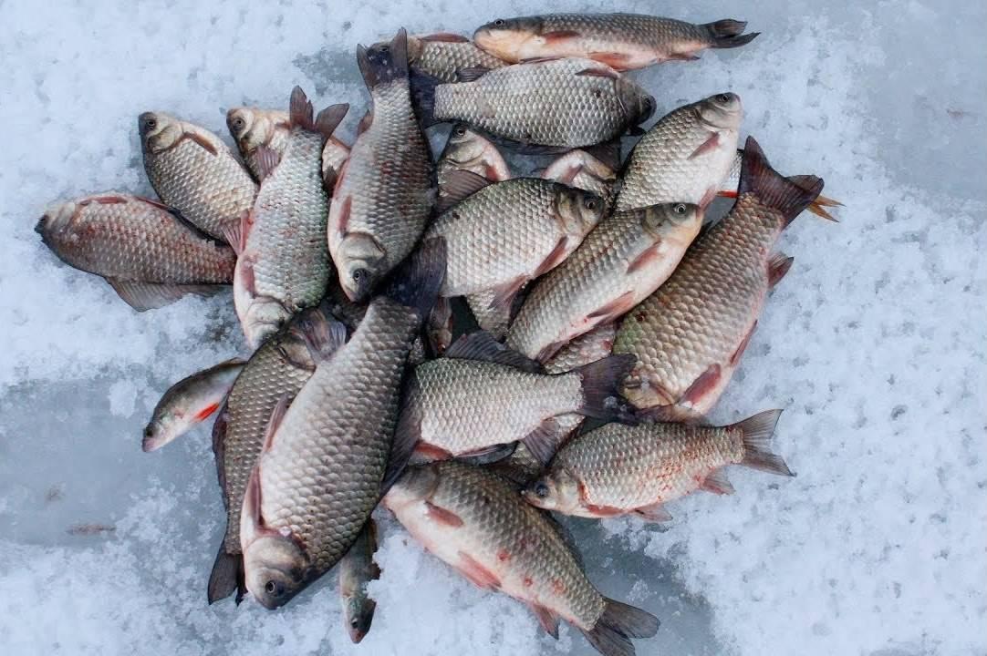Ловля карася зимой на мормышку: как выбрать, как ловить, наживки