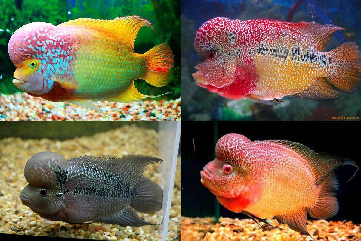 7 аквариумных рыбок, которые стоят как автомобиль или даже дом