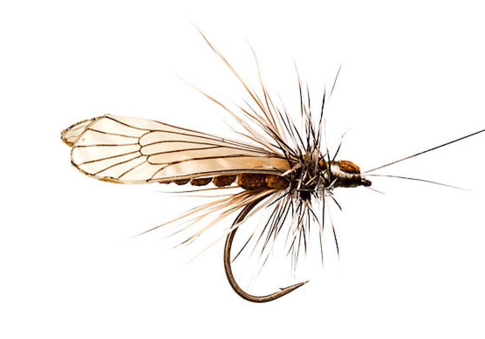 Ловля нахлыстом: основы для начинающих, что такое рыбалка на мушки? - читайте на сatcher.fish