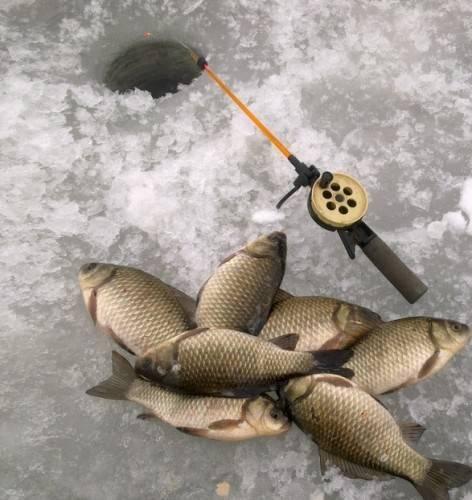 Как ловить карася зимой на мормышку и поплавок