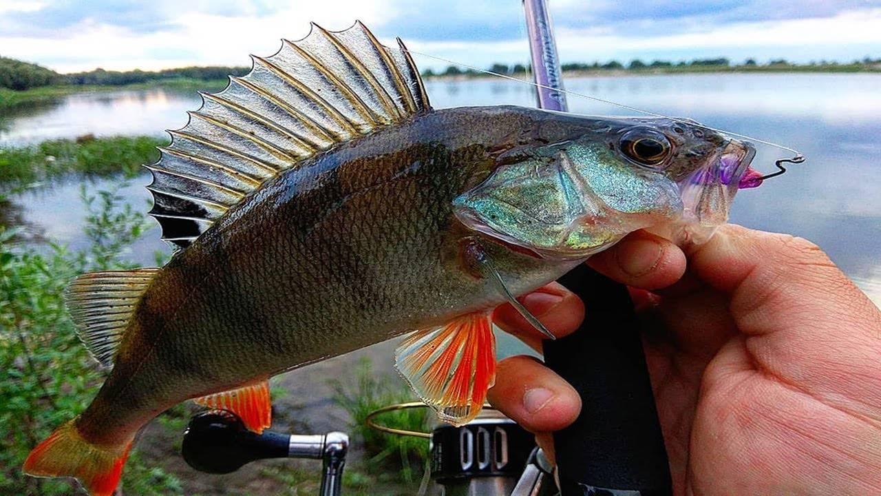Что ловится в апреле, необходимые снасти и приманки на рыбу