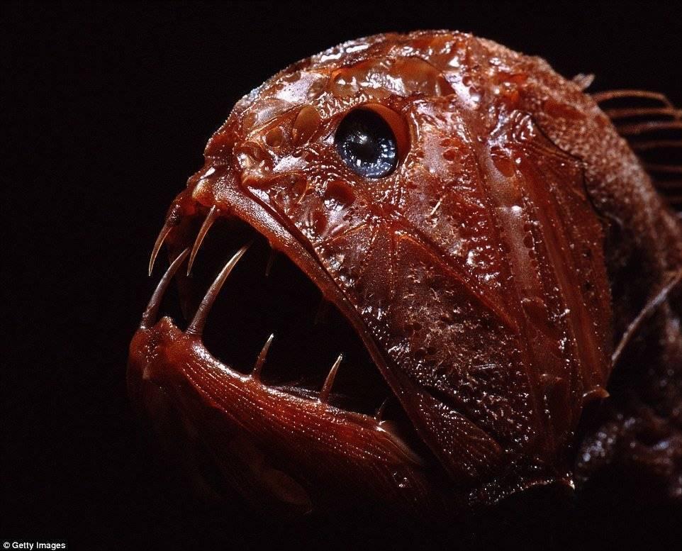 Рыбы черного моря