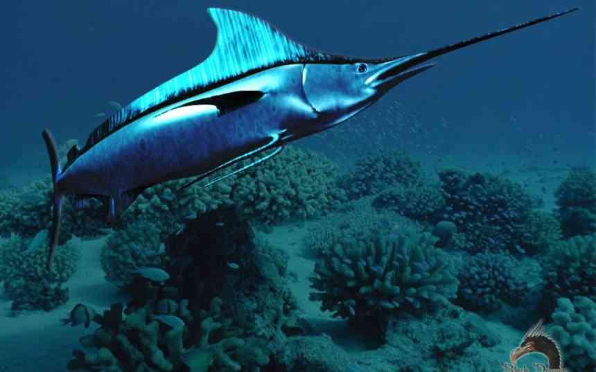 3 самых полезных свойства рыбы (и список лучших сортов)