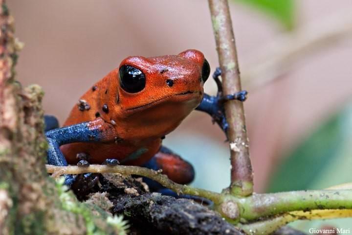 Топ-15 самых необычных видов лягушек