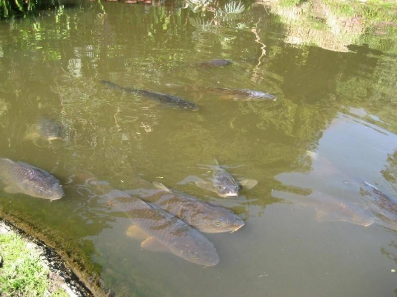 Рыба щука: описание и искусственное разведение — cельхозпортал