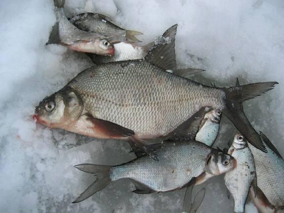 Рыбалка в раменском районе московской области - лучшие платные и бесплатные места, цены и условия