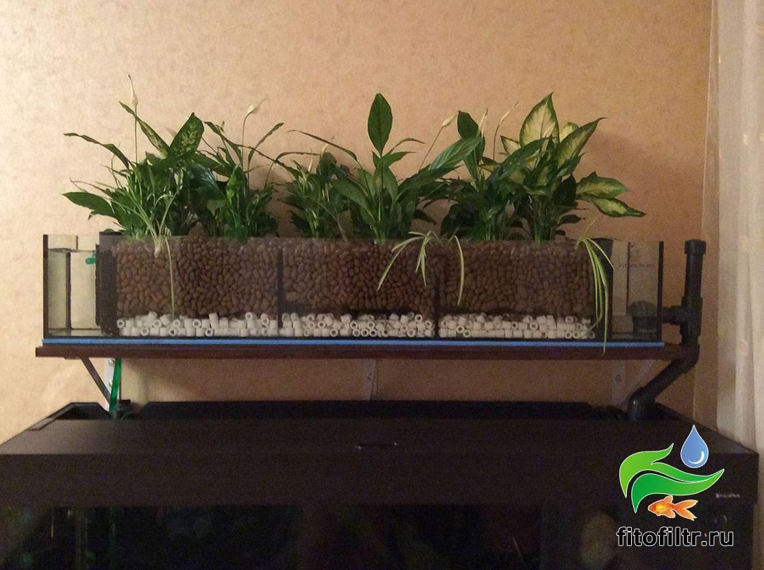 Фитофильтр для аквариума: топ 5 растений, как сделать своими руками