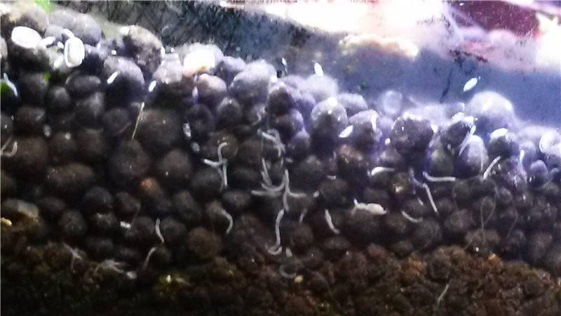 Белые червячки в земле комнатных растений: как избавиться от прозрачных червей