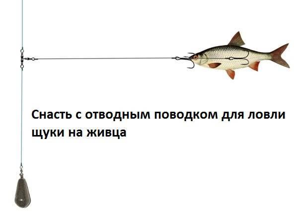 Рыбалка с отводным поводком: что это? применение московской оснастки при ловле хищника на спиннинг, советы начинающим, фото