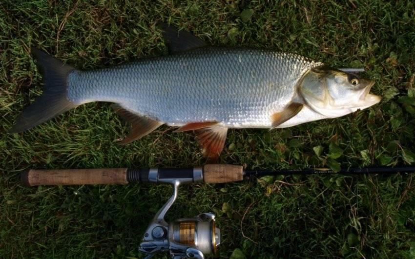 Щука на спиннинг. выбираем место ловли – рыбалке.нет