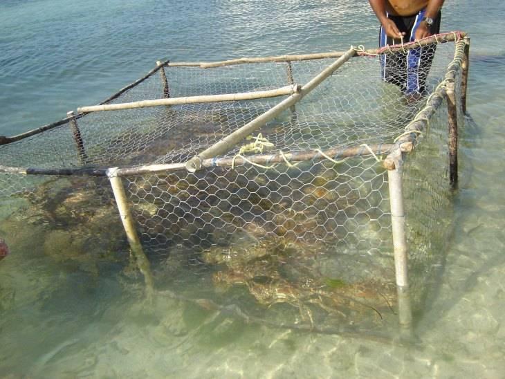 Рыбалка | террария вики | fandom