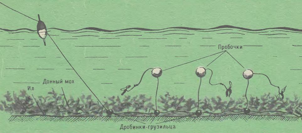 ✅ ловля карпа на поплавочную удочку, с берега, с лодки, в пруду - рыбзон.рф