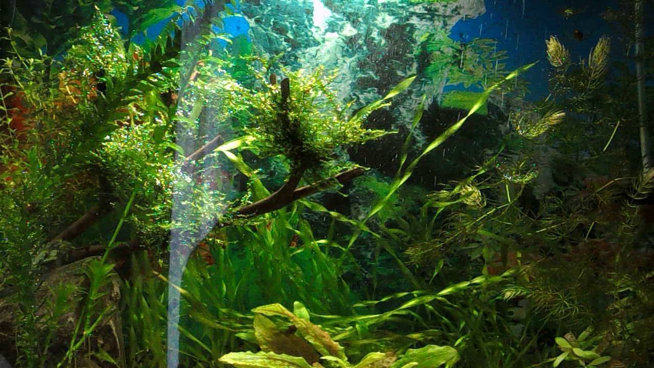 Аквариумный дизайн своими руками: фото, как правильно оформить, аквадизайн, красивое оформление корягами, камнями, растениями, идеи и варианты для небольшого и большого аквариума