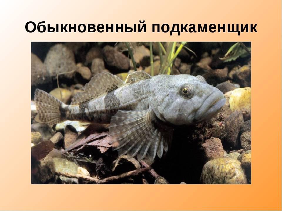 Змееяд: как выглядит, где обитаем, чем питается и интересные факты (фото)