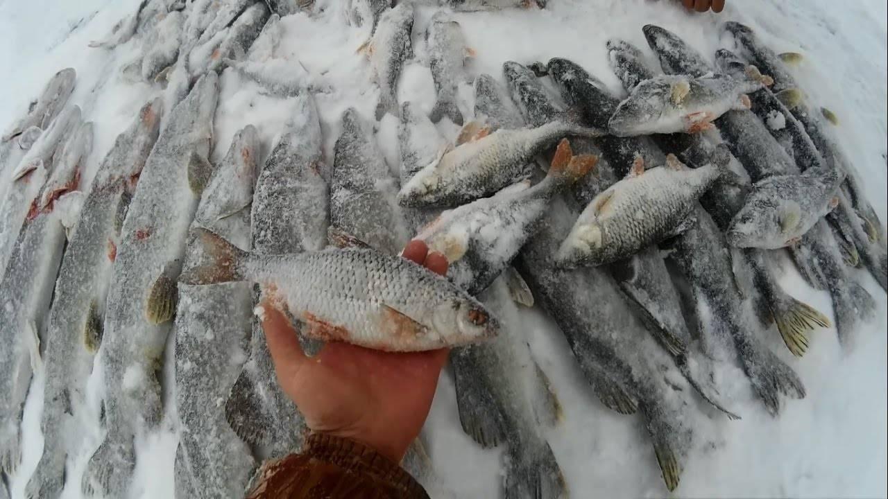 Рыбалка в ишимском районе (тюменская область). форум, отчеты