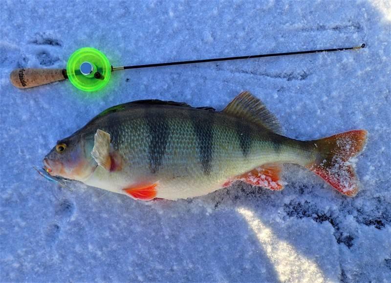 Как ловить окуня летом: на что и чем лучше рыбачить - лучшие снасти и приманки, видео