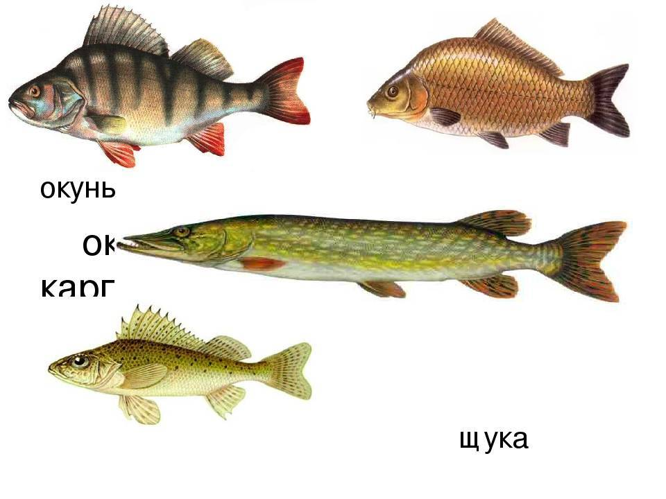 Особенности национальной рыбалки. ловля хищной рыбы.