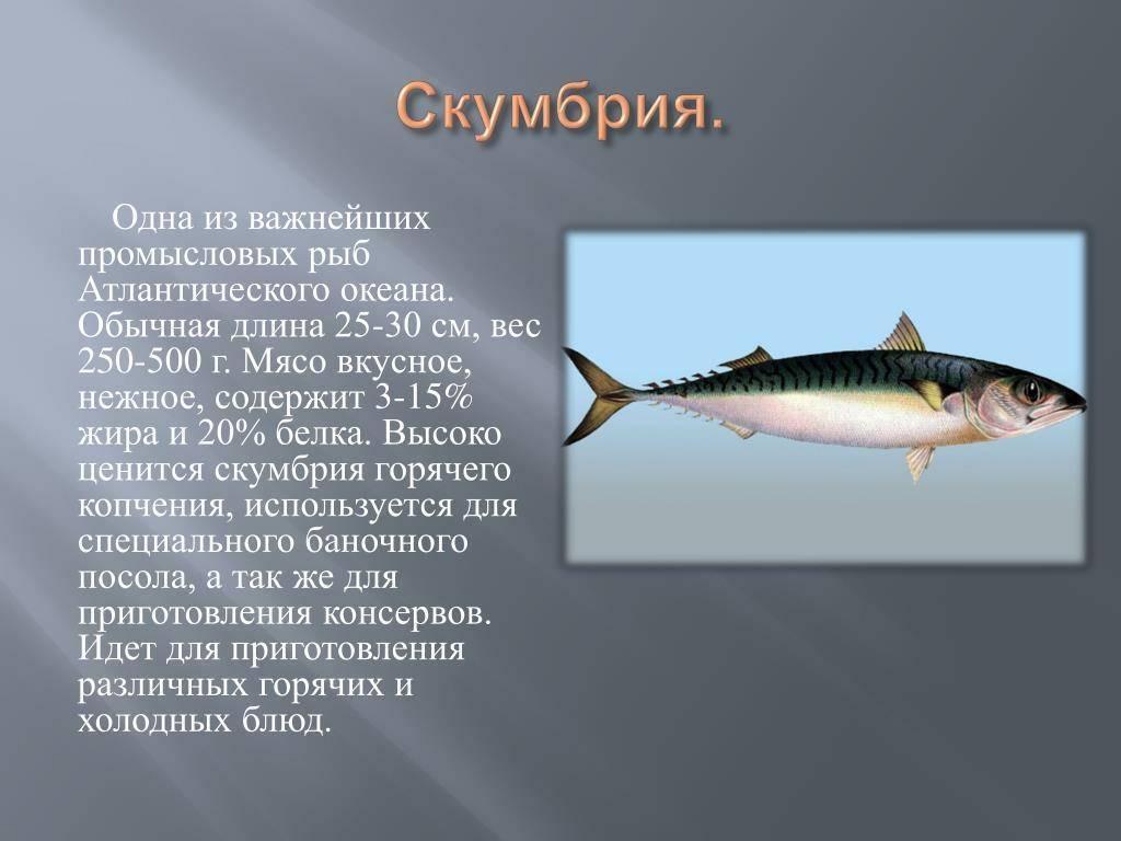 Скумбрия маринованная (20 рецептов с фото) - рецепты с фотографиями на поварёнок.ру