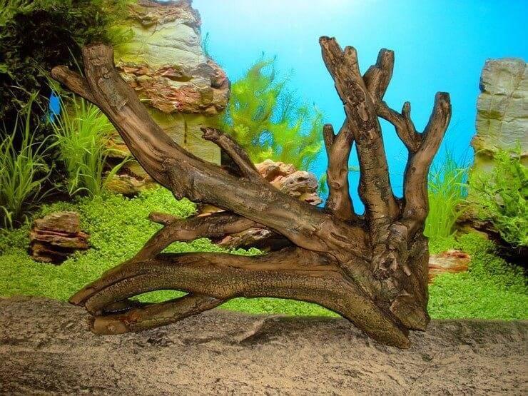 Какие коряги подходят для аквариума