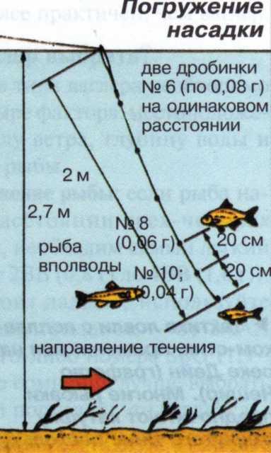 Описание рыбы синец: места обитания и способы ловли