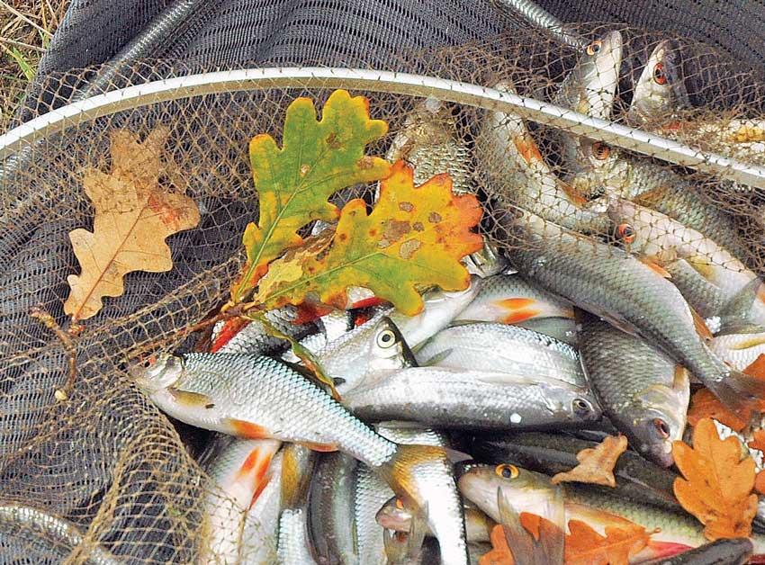 Осенняя ловля на спиннинг: секрет ловли в сентябре, октябре и ноябре,