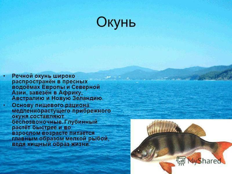Морской окунь: фото, приготовление, польза и вред