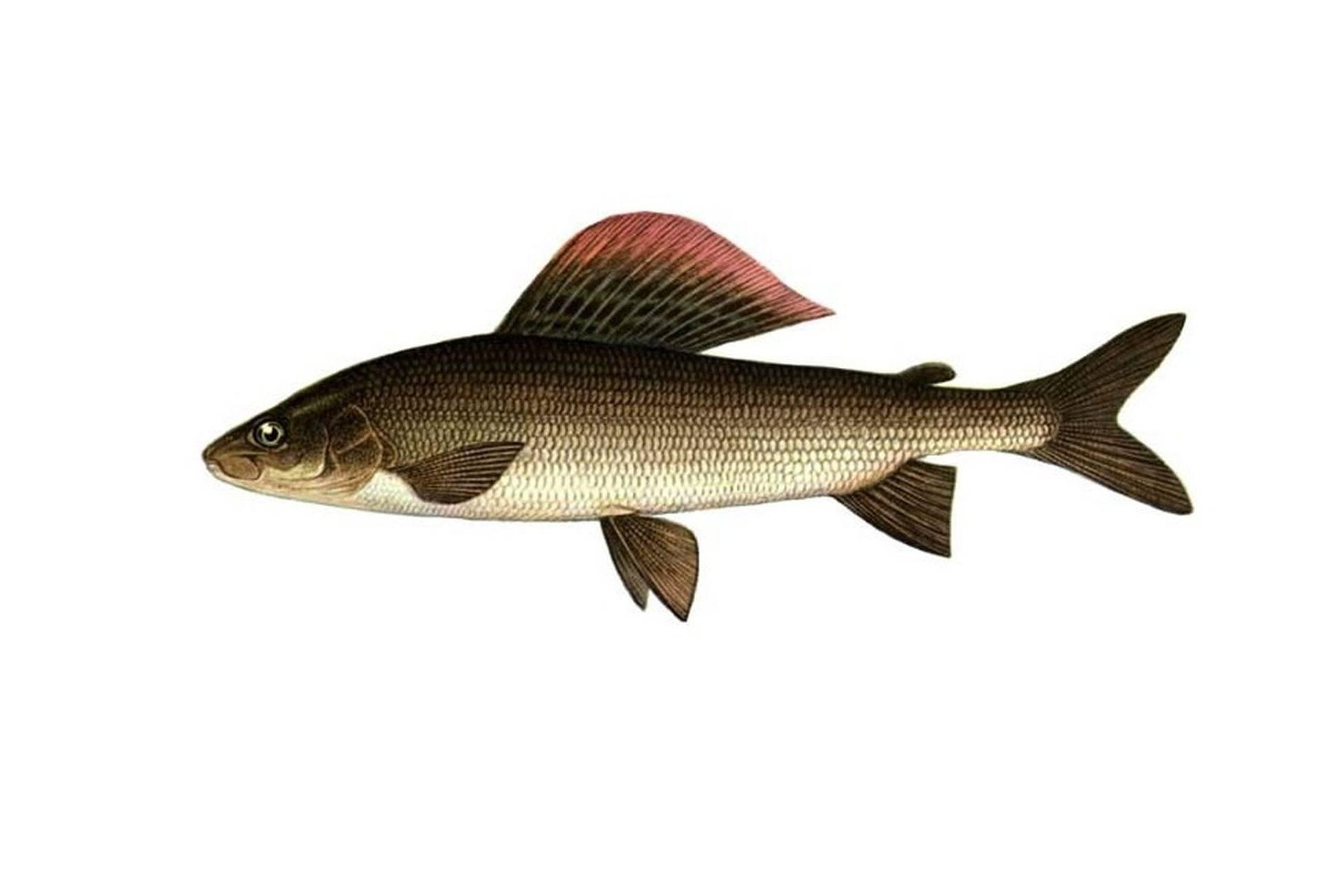 Рыбный промысел: особенности, интересные факты