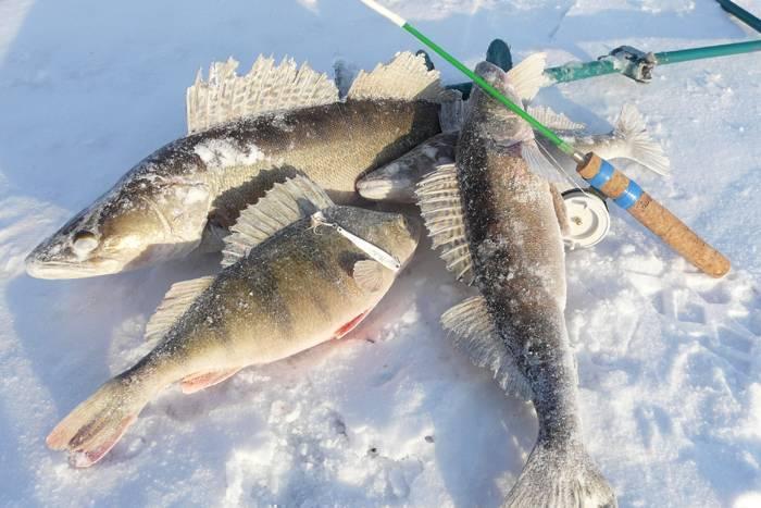 Ловля окуня зимой на балансир: тактика, снасти, уловистые приманки