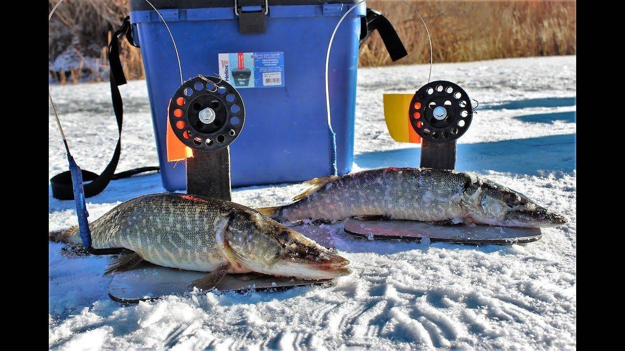Ловля щуки зимой на жерлицы: рыбалка на живца