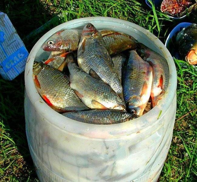 Рыба в водоеме mariland » база отдыха mariland, форелевое хозяйство, отдых на природе, рыбалка в марий эл