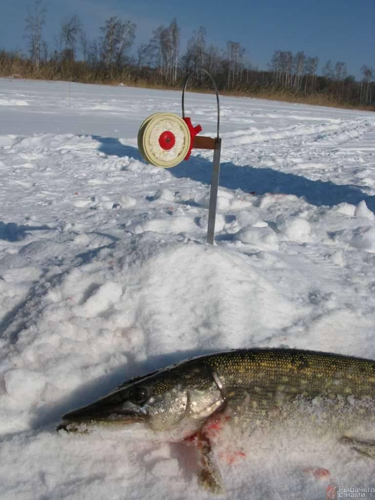 Ловля щуки на жерлицы зимой - читайте на сatcher.fish