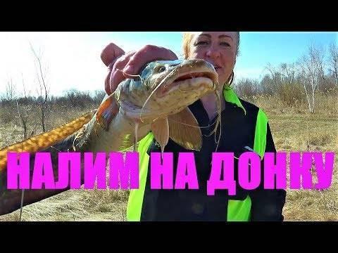 Ловля налима осенью на оке: выбор снастей, наживок и прикормок, рыбалка на налима на фидер осенью