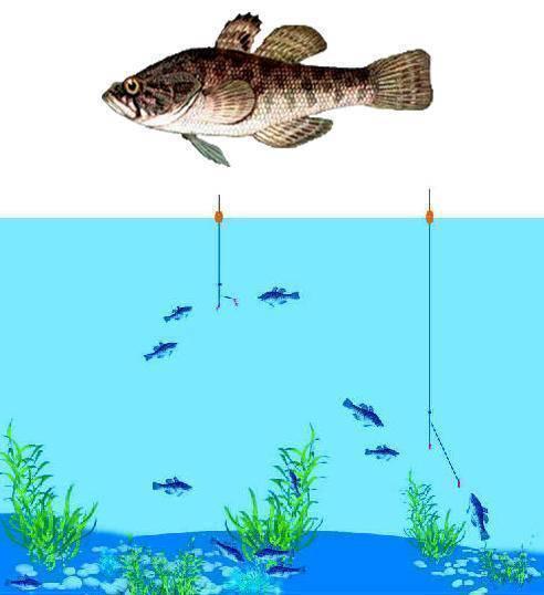 Ловля ротана спиннингом на дропшот: оснастка и правильная проводка - читайте на сatcher.fish