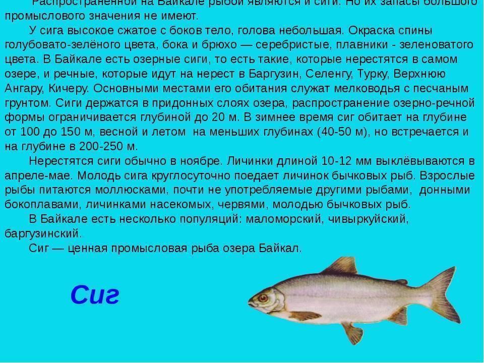 Где водится скумбрия в россии — ловись рыбка