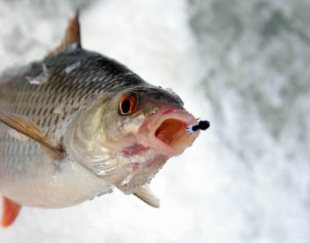 Рыбалка на волге « все о рыбалке | охота | видео | статьи | техника ловли | календарь рыболова | виды рыб