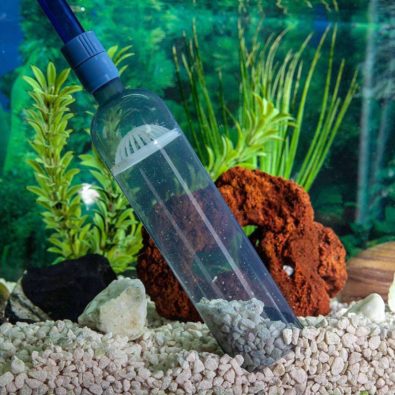 Загрязнился грунт в аквариуме? что необходимо знать прежде, чем приступить к чистке и кипячению песка?