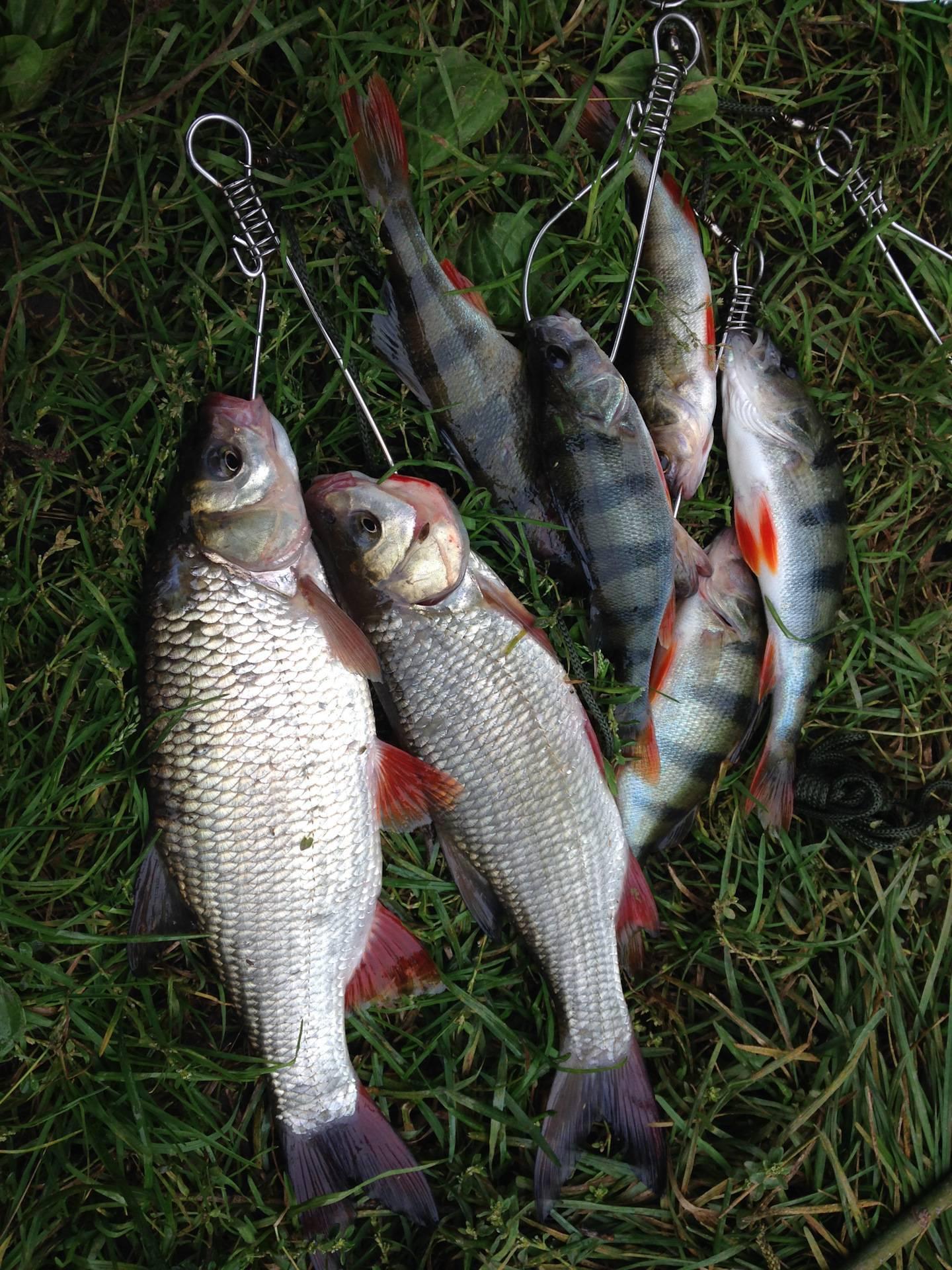 Рыбалка на оке - рыбные места, снасти, приманки