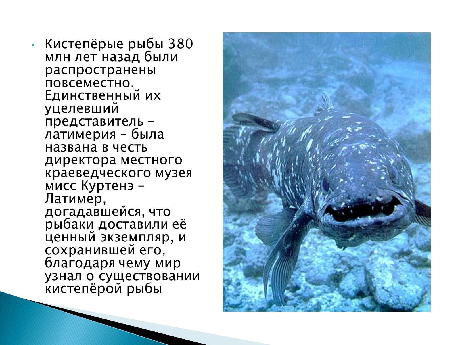 Где обитает латимерия: описание кистеперой рыбы, сохранившейся благодаря естественному отбору
